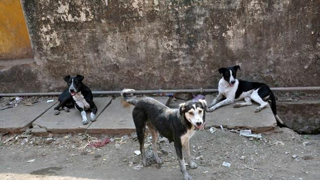 The population of strays in the city has been estimated at around 50,000, which was around 11,000, five years ago.(HT PHOTO)