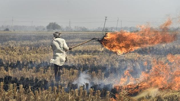 The NGT had said two years had elapsed since its verdict in the Vikrant Tongad case, in which it had passed a slew of directions to stop crop burning, but the state government had shown a lethargic approach.(Burhaan Kinu/HT File Photo)