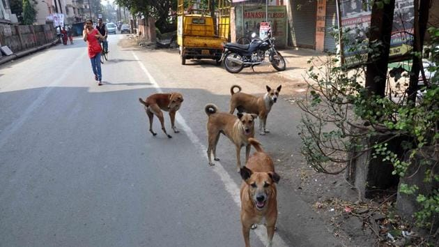 When the men reached the petrol pump, a stray dog started barking at them aggressively. The victim and his friends tried to shoo it away. The victim then threw a stone at the dog.(HT file photo)