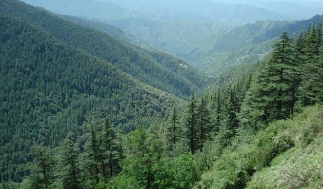 India's forest cover measures 7,08,27,300 hectare.(File photo)