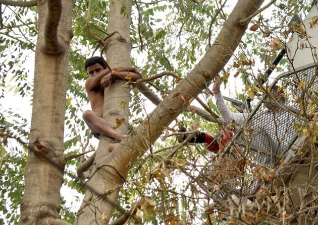 Every time the rescuers tried to reach him, the man, identified as Deepu, shifted his location and clung on to the tree.(HT PHOTO)