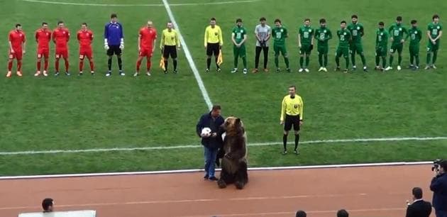 A grizzly bear was seen clapping its claws as it tried to warm up the crowd before the start of a Russian football league game.(Twitter/markgbullen)