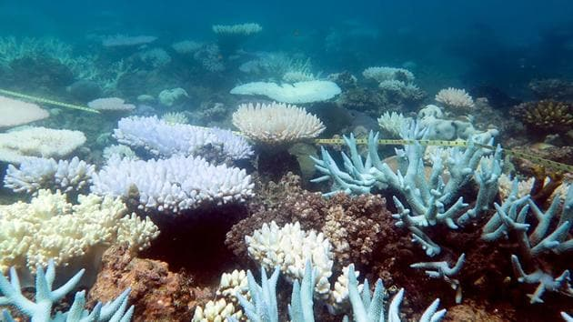 An undated handout photo received from ARC Centre of Excellence for Coral Reef Studies on April 19, 2018 shows a mass bleaching event of coral on Australia's Great Barrier Reef.(AFP)
