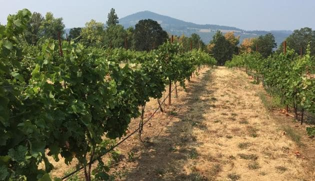 Oregon's Columbia River Gorge is known for spectacular waterfalls but it's also famous for wine, with more than 40 wineries in 40 miles (60 kilometers).(AP)