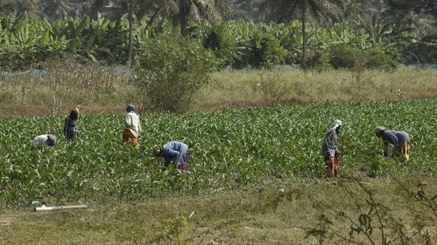 The Karnataka government's decision last June to waive Rs 8,165 crore worth of farm loans taken from cooperative banks significantly did not include public sector nationalised banks and limited the amount to Rs 50,000.(HT File Photo)