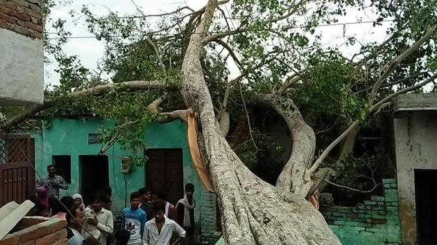 A tree that fell down in Agra during the dust storm on Thursday.(HT Photo)