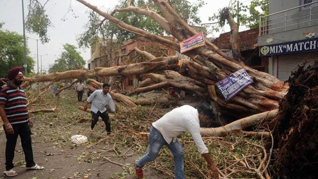 People clearing a road blocked by a fallen tree at Kheria Mod near Agra on April 3.(PTI Photo)