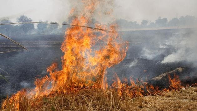 Wheat stubble on fire in a field in Rohtak on Thursday. As per the Haryana Pollution Control Board, 123 instances of fire have been spotted in Meham, Sampla, Lakhan Majra, Rohtak and Kalanaur blocks of the district between April 16 and 30.(Manoj Dhaka/HT)