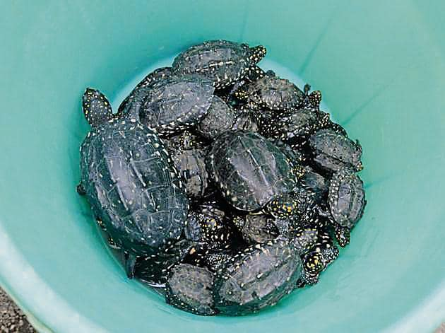 A few of the turtles cops rescued on Saturday.(Rishikesh Choudhary)