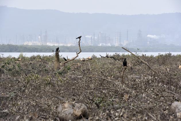 Mangroves cut at Sewri Creek for the upcoming project in Mumbai.(ANSHUMAN POYREKAR/HTPHOTO)