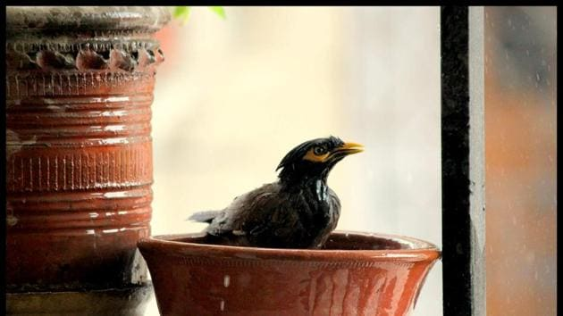Place shallower water bowls on an elevated spot for birds to take a dip in.(Photo: Shivam Saxena/HT)