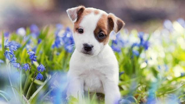Here's why your dog is cute.(Shutterstock)