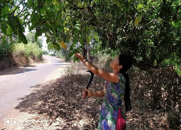 Sarita Thapa's day is gruelling - cooking, chores, childcare and up to 12 hours in the field. But because she is 'accompanying' her husband, she earns only half as much as he does.(Reetika Revathy Subramanian)