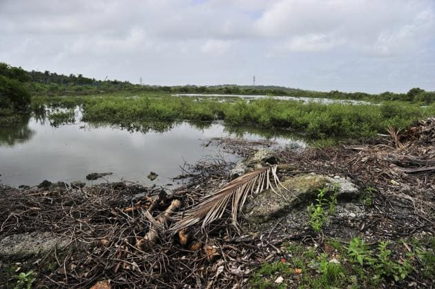 Patch of land where mangroves are under threat in Madh island, Malad(HT Photo)