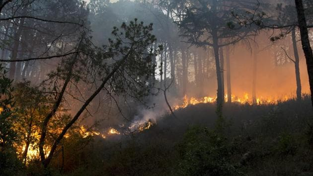 Ten districts of Himachal, except Kinnaur and Lahaul-Spiti, have been affected by forest fires this summer.(HT/REPRESENTATIVE IMAGE)