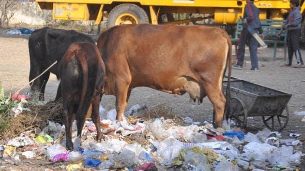 Dehradun produces 327.9 tonnes of plastic waste per day, according to the survey.(Vinay Santosh Kumar/HT Photo)