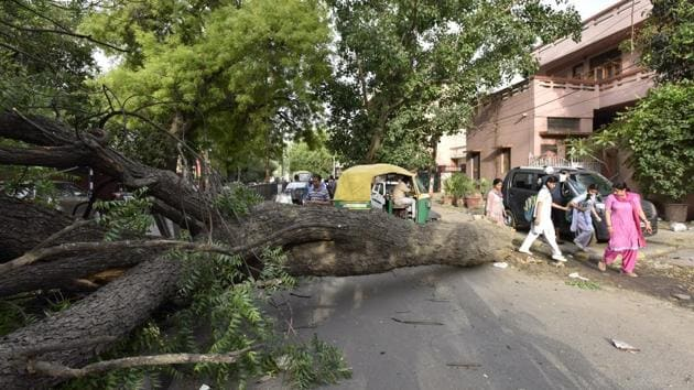 The move to plant more saplings is vital as Gurugram has lost significant tree cover in last two years due to the construction of underpasses, flyovers and underpasses at Iffco Chowk, Signature Tower, Rajiv Chowk, and Hero Honda Chowk.(Sanjeev Verma/HT File Photo)