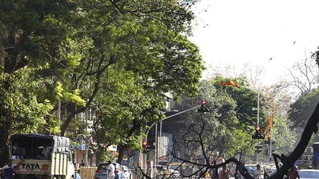 The Brihanmumbai Municipal Corporation (BMC) has been facing flak for unscientific methods of tree trimming these days.(HT File (Representational Image))