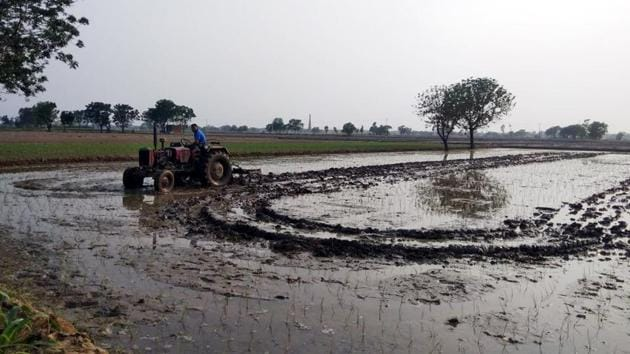 While the government has set June 20 as deadline for paddy sowing, some farmers have already started transplanting the crop in the state.(HT Photo)
