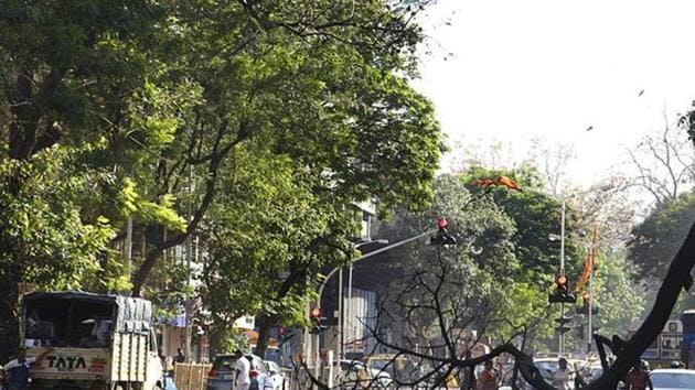 BMC has been facing severe flak for unscientific methods of tree pruning in Mumbai.(HT File)