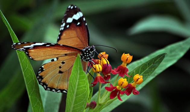 How winged beauties at Thousand Shades Butterfly Park charm Gurugrammers