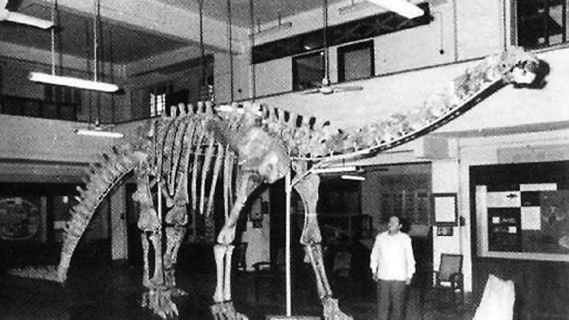 A file photo of the skeleton of the herbivorous dinosaur Barapasaurus tagorei at the Indian Statistical Institute, Kolkata.(Photo courtesy: Dinosaurs of India by Ashok Sahni)