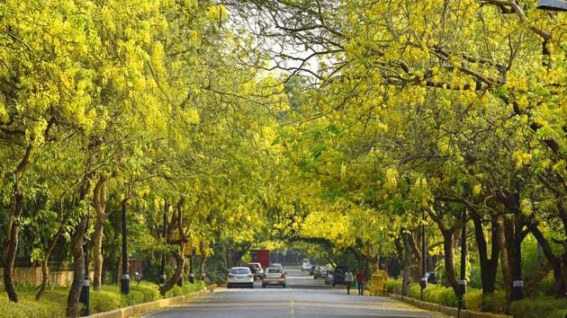 Some 16,500 trees are likely to face the axe to make way for flats, offices and a trade centre in seven south Delhi neighbourhoods.(HT/Photo for representation)