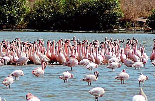 The study will focus on the impact on birds as the project progresses.(HT file)