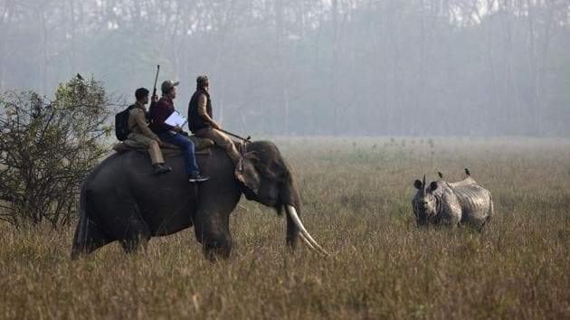 Forest officials count a horned rhinoceros from on top of an elephant during a rhino census at the Pobitora Wildlife Sanctuary in Assam.(AP File Photo)