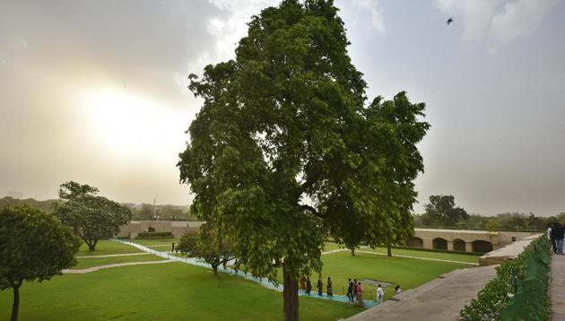 The Ashoka tree at Rajghat.(Raj K Raj/HT PHOTO)