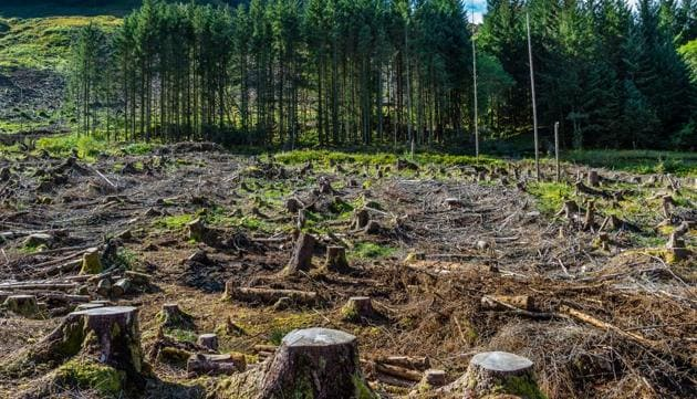 The NGO also alleged that indiscriminate chopping of trees like deodar, pine etc. was being undertaken for the highway project and the exact number of axed trees was not available as forest clearances have been applied for in segments by the project proponent.(Getty Images/iStockphoto)