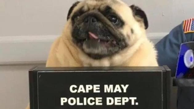 Cape May police department posted a photo of Bean on Facebook on Sunday.(Facebook/Cape May Police Department)