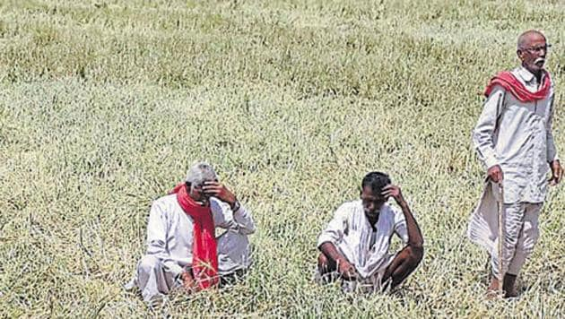 Rajasthan, like many other states, is in the midst of an agrarian crisis caused largely by falling prices for farm output .(HT File Photo)