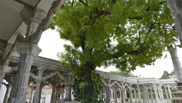 <p>At the Jain Dadabari in Mehrauli, an old Neem tree, classified as natural heritage, adds a splash of green to the serene white complex.</p> (Sanchit Khanna /...