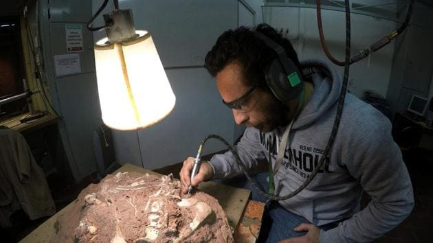 The Wyoming brachiosaur is not the largest dinosaur known to man -- since other excavations have turned up fossils from animals that were likely larger -- but it is the biggest foot in evidence.(Reuters photo for representation)