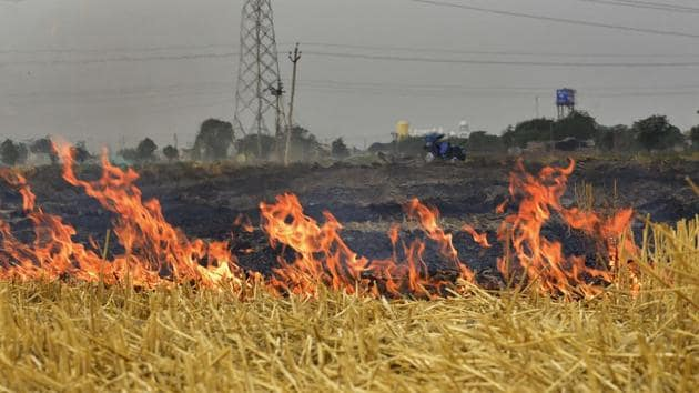 Burning of agriculture waste is one of the reasons for high aerosol levels.(HT FILE)