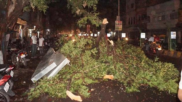 The city saw more than 950 tree-falls in June 2018, which claimed six lives.(HT File Photo/Representative Image)