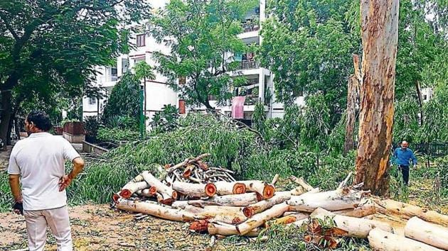 Forest officials found at least 11 eucalyptus trees were cut and 27 trees were pruned.(Photo Courtesy: Varhaen Khanna)