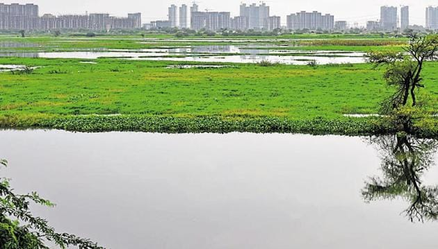 After a search of around two hours by professional divers, the baby's body was found below the flyover of Najafgarh drain at Sector 16-B Dwarka.(Vipin Kumar/HT File Photo)