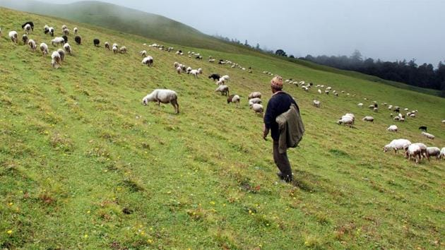 The Uttarakhand high court has also banned overnight stay and commercial grazing of cattle in the alpine meadows/subalpine in the state.(HT File Photo)