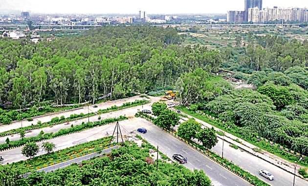 Noida authority will plant over 180 species of trees, 90 species of shrubs, grasses, and 20 species of bamboos, palms.(Sunil Ghosh/HT)