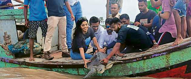 WCAWA members and locals from Dahanu release one of the two Olive Ridley Turtles into the sea near Dahanu.(HT)