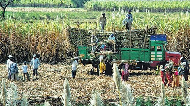 Sugar mills, which are supposed to pay farmers, blame the non-payment on unsold sugar stocks and fall in sugar prices(HT Photo)