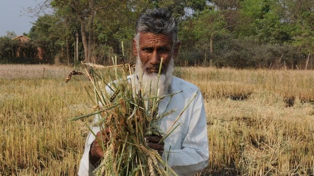 Farmers pay between 1.5 and 2% of the total premium. The rest is shared 50-50 between the Centre and states.(HT File Photo)