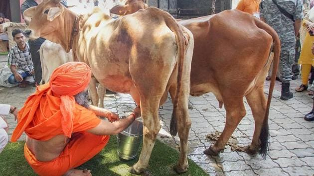 Baba Ramdev milks a cow during the launch of Patanjali's dairy products in New Delhi.(PTI)