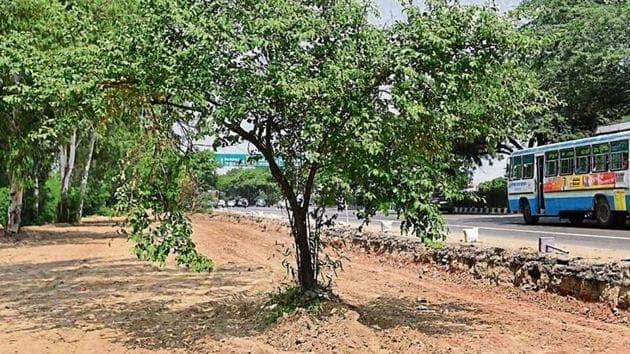 The stretch near Singhu Border where road widening has begun. The forest dept says 400 trees have been cut here. NHAI has denied the allegations.(HT Photo)