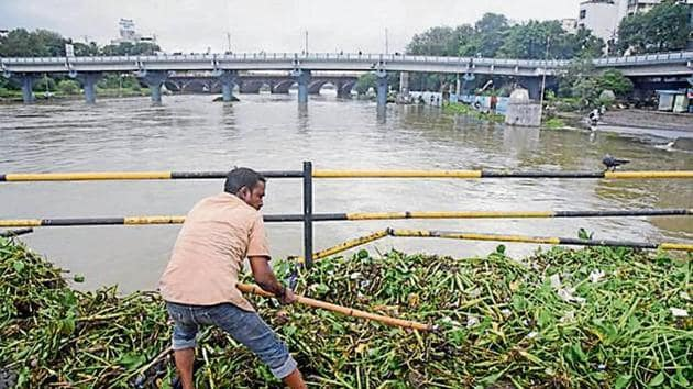 A Pune municipal corporation worker cleans the hyacinth and waste from Mutha river.(HT FILE PHOTO)