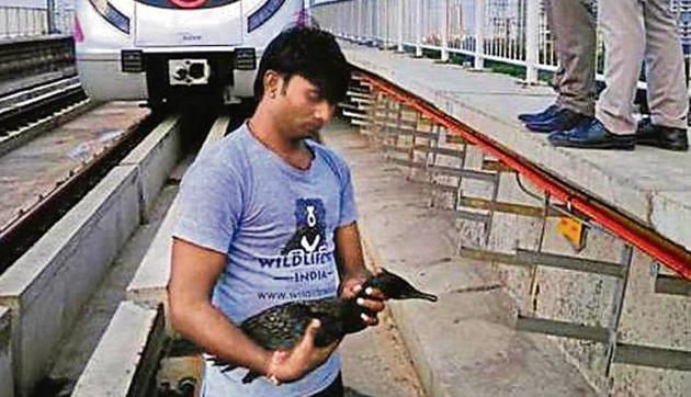 An Indian cormorant fell on the tracks near Kalindi Kunj.(DMRC)