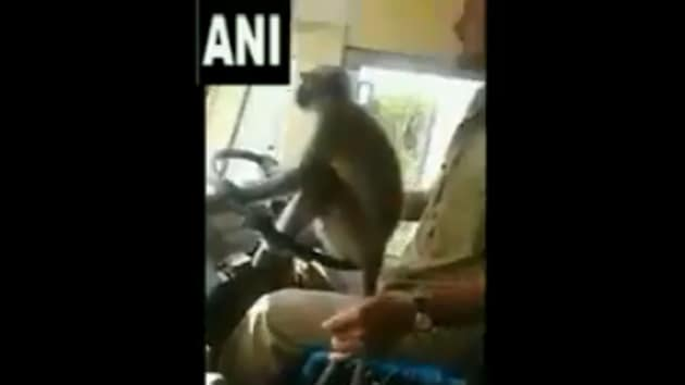 A bus driver of the state road transport service has been taken off duty for allegedly allowing a monkey to steer its wheel in Karnataka's Davangere district.(ANI Photo)