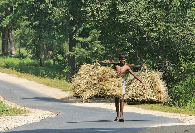 On the road in Chhattisgarh.(HT Photo)